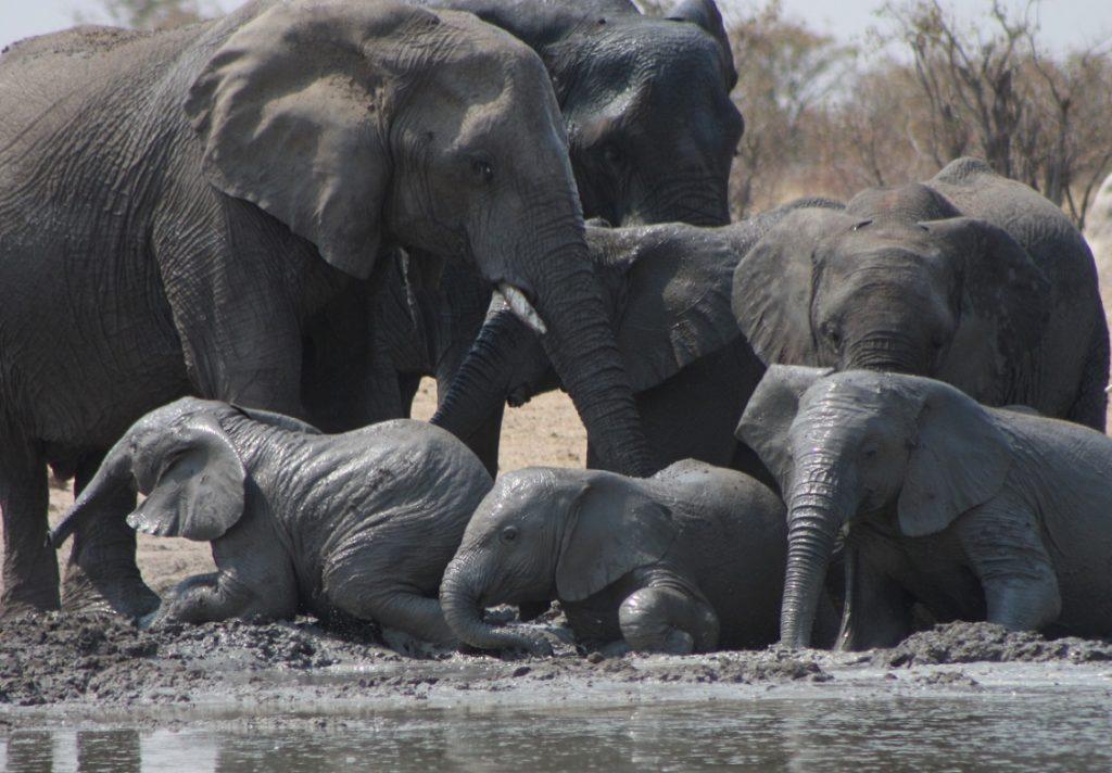 Namibialiebe Elefanten Etosha Wasserloch