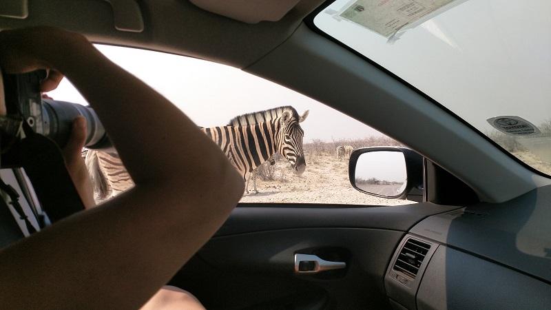 Namibialiebe Etosha