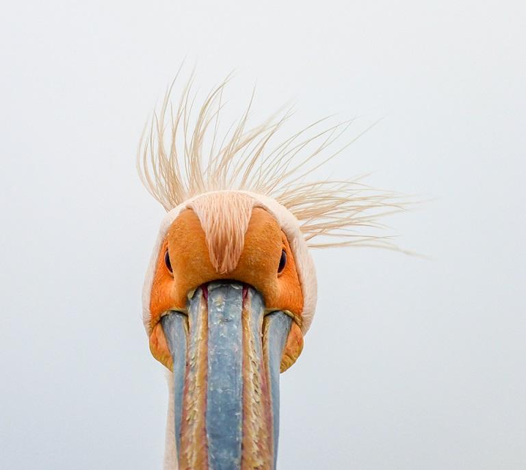 Namibialiebe - Tipps für deinen Besuch in Swakopmund - Pelikan