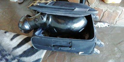 Namibialiebe Hippo