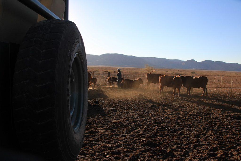 Farmtour Büllsport