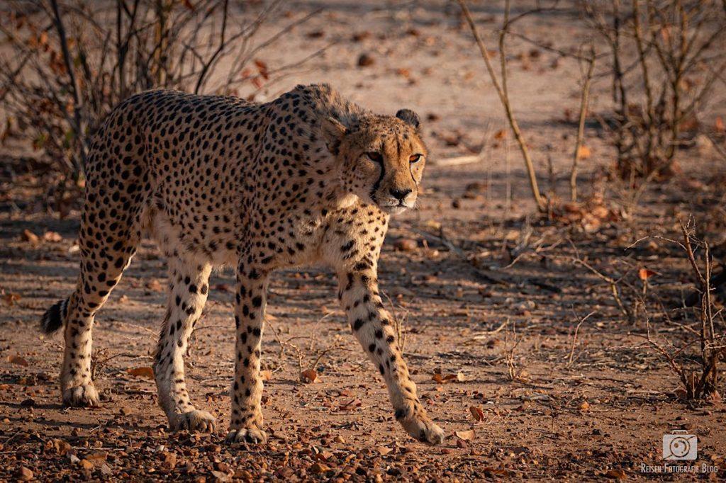 Fototipps Namibialiebe