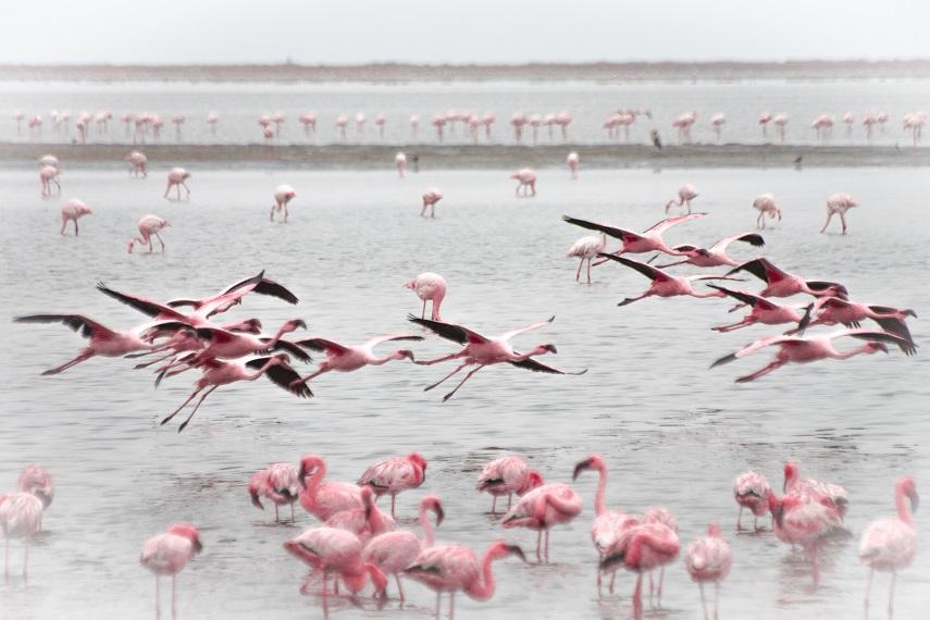 Flamingos in der Lagune Namibialiebe Tierfotos