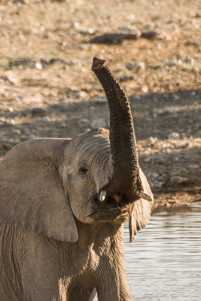 Elefant sagt Hallo Namibialiebe