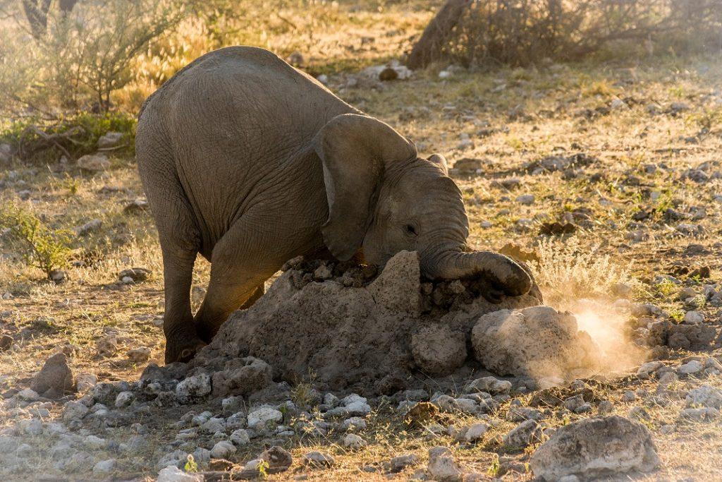 Babyelefant Namibialiebe