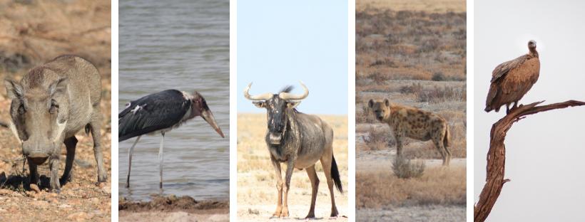 Ugly Five Namibialiebe