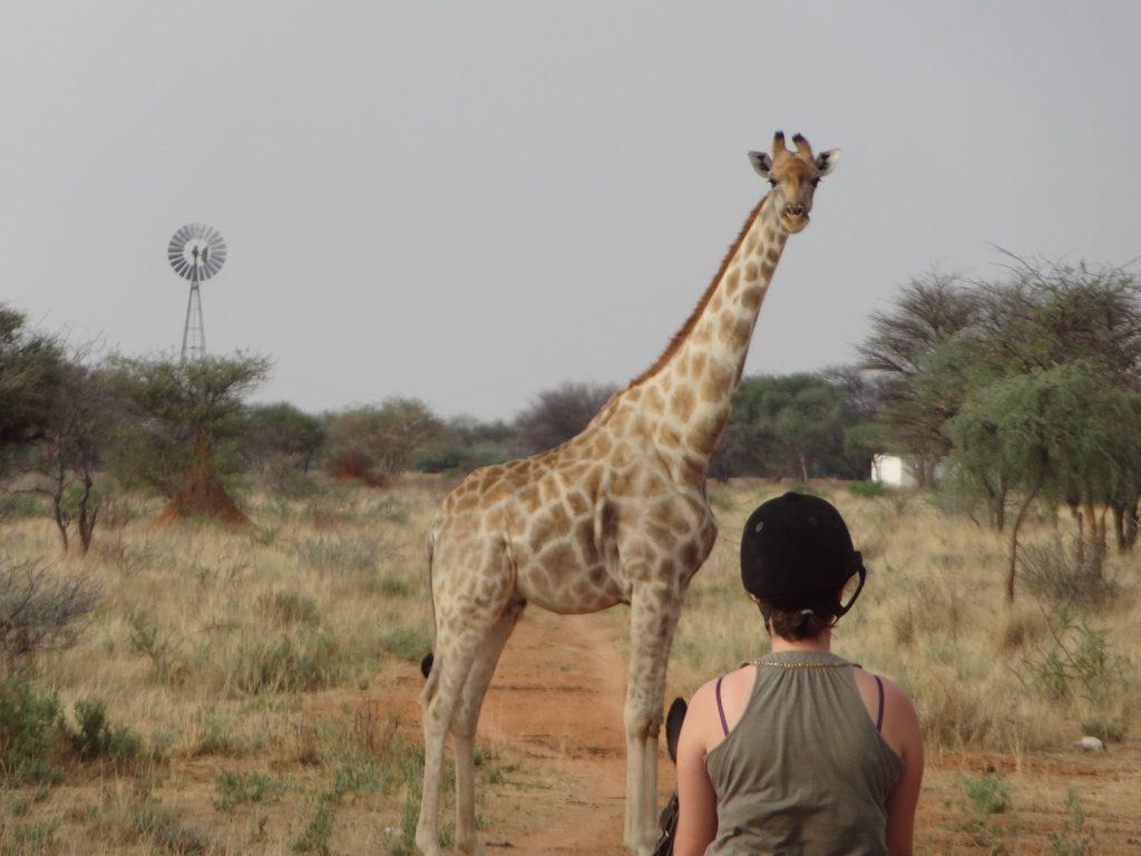 Giraffe Reiten