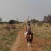 Safari im Sattel in Namibia