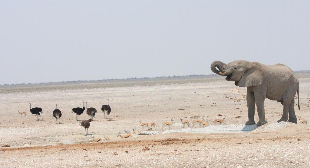 Namibia Flitterwochen
