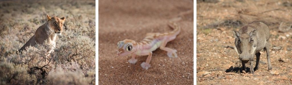 Namibia Tierwelt