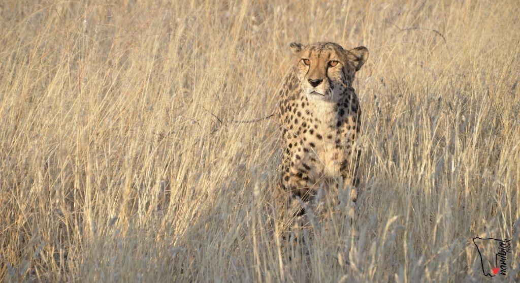 Reisezeit Namibia August