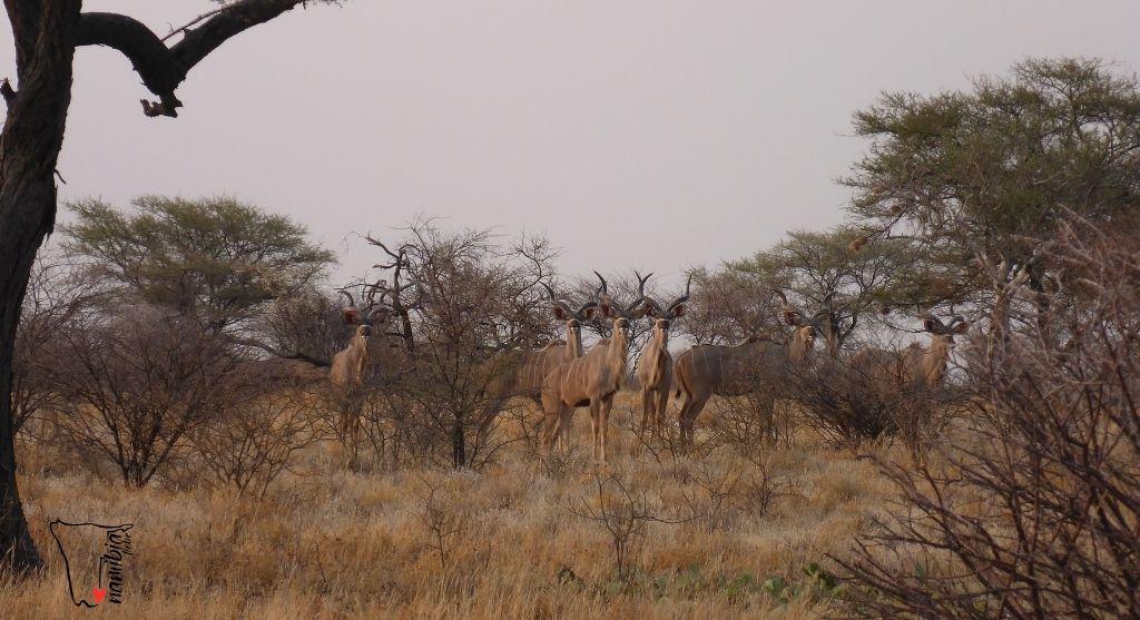 Die beste Reisezeit für Namibia