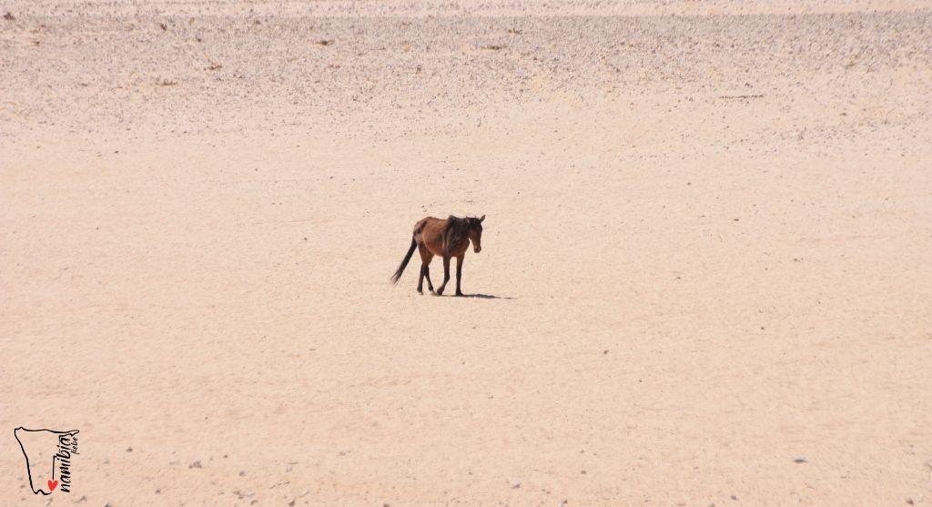 Wildpferd Namib Namibia