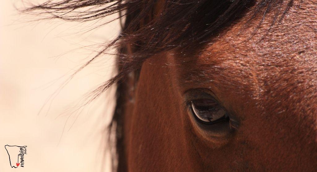 Auge eines Wildpferds